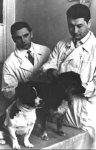 Уголек и Ветерок - космические собаки